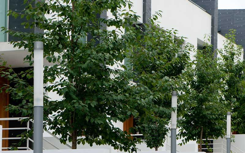 arboles-fachada-urbanizacion